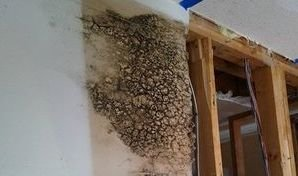 Water Damage Restoration On Moldy Wall